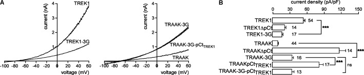 Effect of decoupling pCt and M4 on TREK1 and TRAAK. (A) Representative whole-cell recordings of HEK cells expressing wild-type or mutated channels. Voltage ramps were applied from –100 to 60 mV from a holding potential of –80 mV. (B) Current densities at 0 mV. Data are presented as mean ± SEM. ∗∗∗ p