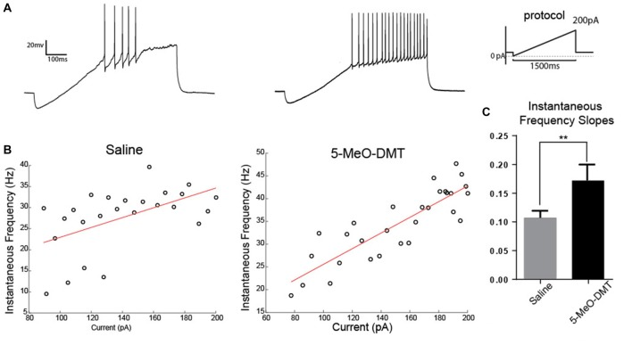Young GC in 5-MeO-DMT-treated mice show a greater capacity for high frequency firing. (A) Membrane potential recording in response to a current ramp. (B) Linear regressions (ramp current vs. instantaneous AP frequency). (C) Average slopes (ramp current vs. instantaneous AP frequency relationship). ** p = 0.0036.