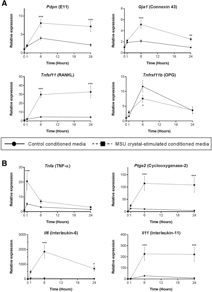 Indirect effects of MSU crystal-stimulated RAW264.7 macrophage conditioned medium on MLO-Y4 cell gene expression. RAW264.7 macrophages were cultured with or without 0.5 mg/mL monosodium urate (MSU) crystals for 24 h for preparation of MSU crystal-stimulated conditioned medium and control conditioned medium, respectively. Conditioned medium preparations were added to MLO-Y4 cells (40% final concentration in a well) for 0, 1, 6, and 24 h. MLO-Y4 cells were harvested and real-time PCR was used to determine changes in the relative mRNA expression levels of a bone-related and b inflammatory genes. Data shown are pooled from three biological repeats and are presented as mean (SEM); two-way ANOVA P Interaction = 0.007 for Tnfrsf11b , P Interaction = 0.0005 for Tnfa , P Interaction