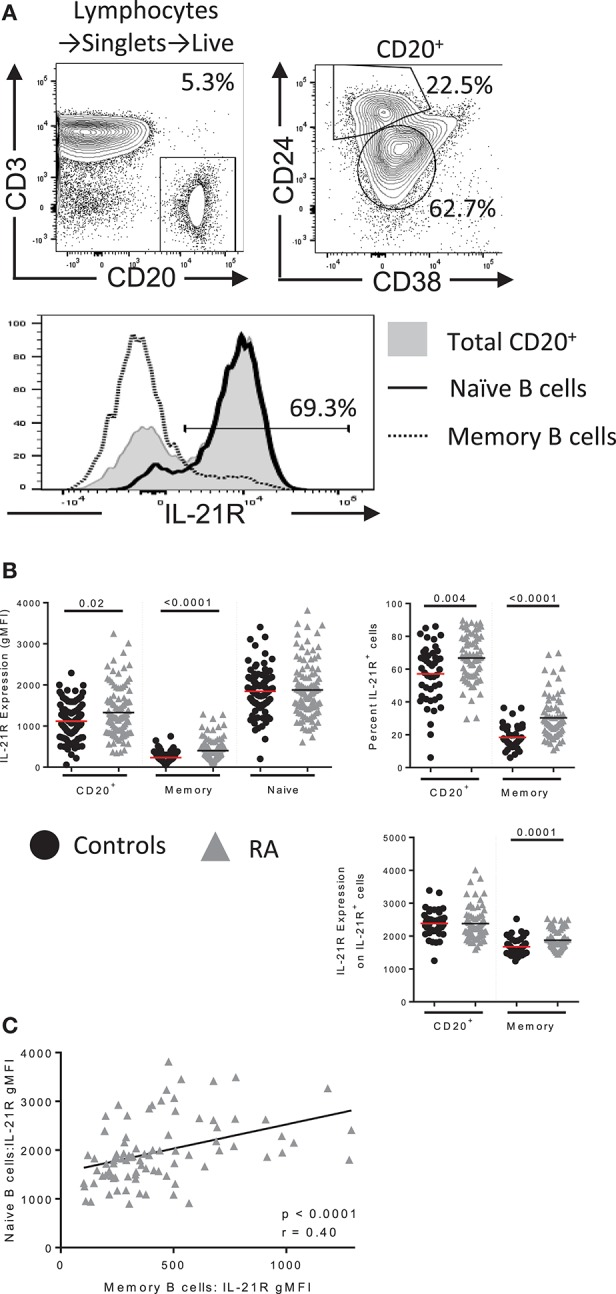 IL-21R expression is increased in B cells in RA. (A) (top) Gating scheme for total B, memory and naïve B cells with IL-21R expression in each population (bottom) (B) (left) IL-21R levels on CD20 + , total memory (CD20 + CD38 − CD24 hi ) and naïve (CD20 + CD38 int CD24 int ) B cells in (black circles) healthy control (n = 46) and (gray triangles) RA subjects (n = 71) by flow cytometry. (Right) Percent of IL-21R + cells (center, left) and IL-21R expression was quantified on IL-21R + cells (bottom, right) in CD20 + and memory B cells in RA and control subjects. (C) IL-21R levels in memory and naïve B cells were correlated in RA subjects. Significance was determined using a Mann Whitney U test and a Pearson correlation.