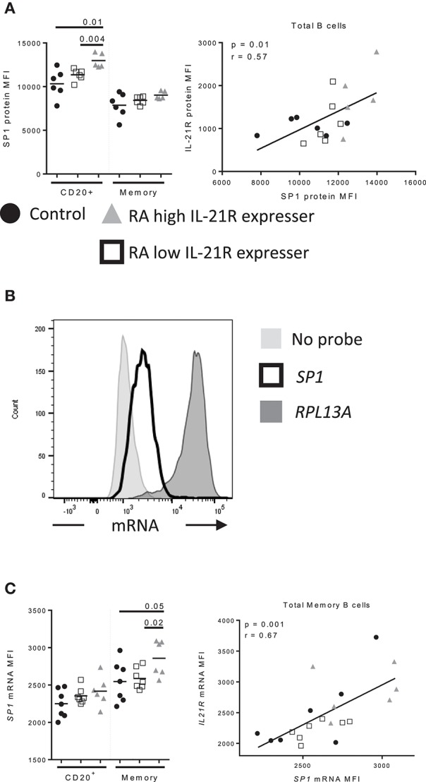 Increased SP1 expression correlates with increased IL-21R expression in memory B cells in RA subjects (A) SP1 protein levels were assessed by flow cytometry in control ( n = 6, black circles), RA low IL-21R expressers ( n = 6; open squares) and RA high IL-21R expressers ( n = 5; gray triangles) in CD20 + and memory B cells (CD20 + CD38 − CD24 + ) (left). SP1 protein levels from left were correlated with IL-21R protein expression in total B cells in RA and control subjects ( n = 17) (right). (B) Representative histogram of mRNA levels from a no probe negative control, SP1 and positive control probe, RPL13A . (C) (left) SP1 mRNA levels were determined in total memory B cells in controls ( n = 7, black circles), RA low IL-21R expressers ( n = 7; open squares) and RA high IL-21R expressers ( n = 6; gray triangles). (right) SP1 mRNA levels from left were correlated with IL-21R protein expression in memory B cells in RA and control subjects combined ( n = 20). Significance was determined using Mann Whitney U tests (to compare RA-IL-21 high to controls and RA-IL-21 low ) and correlations were assessed with Pearson correlations.