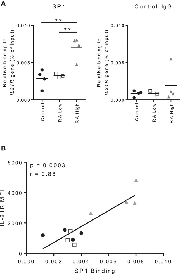 Increased IL-21R expression correlates with increased SP1 binding to the IL-21R promoter in RA. (A) Total B cells were isolated from whole blood from RA patients and controls. SP1 binding to the IL21R promoter region and negative control IgG binding were determined using ChIP-qPCR analysis. The results are presented relative to input DNA. Significance was assessed using the student's t -test; n = 4 [Control (black circle), RA High (gray triangle)] n = 3 [RA Low (white square)]. ** p