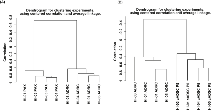 Hierarchical gene expression clustering analysis of peripheral blood, ADRCs, and cADSCs . RNA was extracted from peripheral blood in PAXgene ® tubes and from freshly isolated ADRCs and expanded cADSCs. Gene expression data were obtained by DNA microarray and followed by unsupervised hierarchical clustering analysis. (A) Clustering analysis of gene expression data of peripheral blood and ADRCs. (B) Clustering analysis of gene expression data of ADRCs and cADSCs.