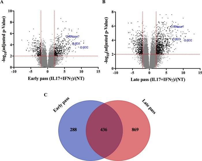 Functional characterization of early and late passage <t>SBK.</t> (A-B) <t>RNA-seq</t> analysis was conducted on early and late passage SBK stimulated with IL-17 and IFN-γ for 48 hours. ANOVA analysis was performed, and the resulting -log 10 (adjusted p-value for false discovery) vs. log 2 fold-change for difference of treatment was plotted. Values with   log 2 fold-change   > 2 and an adjusted p value