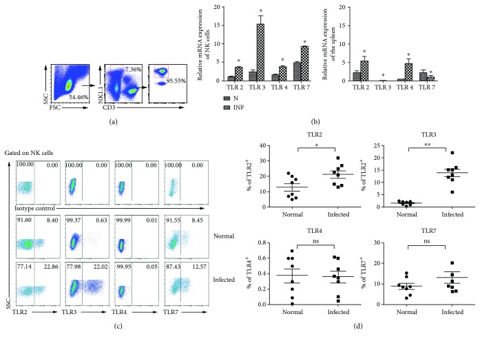 Expression of different TLRs in mouse splenic lymphocytes and NK cells after S. japonicum infection. (a) Splenic lymphocytes were separated from normal and S. japonicum -infected wild-type mice, and CD3 − NK1.1 + NK cells were isolated from splenic lymphocytes by using flow cytometry and the purity of isolated splenic NK cells was identified by FACS. (b) Total <t>RNA</t> of splenic lymphocytes and NK cells was harvested, respectively. The accumulation of TLR2, TLR3, TLR4, and TLR7 mRNA was quantified by using qPCR. The levels of TLR transcripts were normalized to β -actin transcripts by using the relative quantity (RQ) = 2 −△△Ct method. Data represent means ± SEM of at least <t>three</t> experiments. (c, d) Expression of TLR2, TLR3, TLR4, and TLR7 on splenic NK cells was assessed by using flow cytometry. (c) A representative result is shown. (d) Statistic results of 6 to 8 independent results are shown. N: normal; INF: infected; ∗ P