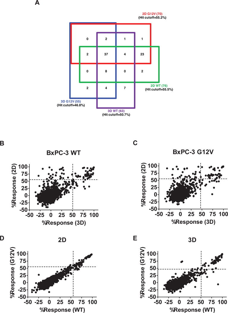 Comparison of performance of compounds in BxPC-3-KRAS G12V and BxPC-3-KRAS WT cells in 3D and 2D formats Primary screening results of Spectrum library against BxPC-3-KRAS WT and BxPC-3-KRAS G12V in 3D and 2D formats. (A) Four-way Venn diagram of active compounds identified from the four screens. A hit was identified as any compound with % inhibition > the corresponding screen hit cutoff. The numbers in parentheses are the numbers of hits specific for that cell line. The numbers in the boxes represent the number of compounds found to active in those overlapping assays. (B–E) Correlation plots of the % inhibition values of compounds in each of the screens: ( B ) BxPC-3-KRAS WT , 2D vs. 3D. ( C ) BxPC-3-KRAS G12V , 2D vs. 3D. ( D ) BxPC-3-KRAS G12V vs. BxPC-3-KRAS WT , 2D. ( E ) BxPC-3-KRAS G12V vs. BxPC-3-KRAS WT , 3D.