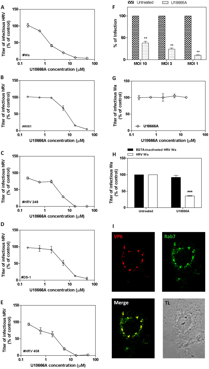 Assessment of the antiviral activity of U18666A against HRV strains and assessment of its mechanism of action. Cells were treated for 20 h with increasing concentrations of U18666A and then infected with HRV Wa (A), WI61 (B), HRV 248 (C), DS-1 (D), and HRV 408 (E). Viral infections were detected as described in the Material and Methods section. The percentage infection was calculated by comparing treated and untreated wells. The results are means and SEM for triplicates.***p ANOVA