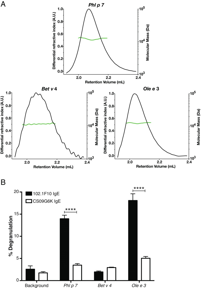 Characterization of oligomeric state and basophil degranulation for the three polcalcin allergens. ( A ) Chromatograms of the RI signals for Phl p 7, Bet v 4, and Ole e 3. The three proteins [in 25 mM Tris⋅HCl (pH 7.4) and 150 mM NaCl with 4 mM CaCl 2 ] were run over a Superdex 75 5/150 column (GE Healthcare) at a flow rate of 0.3 mL/min. The differential RI is shown in black (A.U., arbitrary units). The green lines across the protein elution volumes show the molecular masses of the proteins, indicating a monomeric state. ( B ) Basophil degranulation assay showing the percentage degranulation of RBL-SX38 cells sensitized with 102.1F10 IgE (black bars) and CS09G6K IgE (white bars) antibodies followed by stimulation with 5,000 ng/μL of Phl p 7, Bet v 4, or Ole e 3 or with assay medium (background). Degranulation is expressed as a percentage of that induced by cell lysis. Bars represent the mean ± SEM of three independent experiments. Statistical significance was determined by t test; **** P