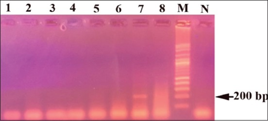 Agarose gel electrophoresis of polymerase chain reaction products obtained from H. dromedarii using IS30A spacer: (M) 1 kb DNA ladder, (N) negative control, lanes 7 and 8 represent positive tick samples and lanes 1-6 represent negative tick samples.