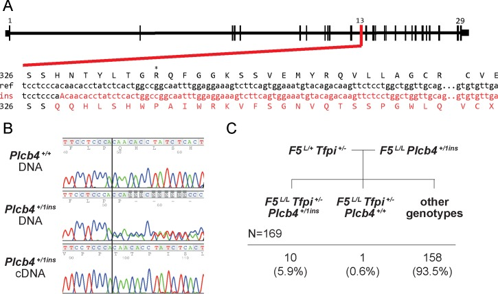 An independent CRISPR/Cas9 induced Plcb4 allele validates the rescue phenotype. A) The CRISPR/Cas9-induced Plcb4 ins1 allele (insertion of the nucleotide 'A' at amino acid 328) results in a frameshift to the protein coding sequence leading to a premature stop codon. B) Sanger sequencing analysis of gDNA from a wildtype mouse and both gDNA and cDNA from a Plcb4 +/ins1 mouse at the Plcb4 1bp insertion site. C) 169 progeny genotyped from a validation cross of F5 L/L Plcb4 +/ins1 mice with F5 L/+ Tfpi +/- .
