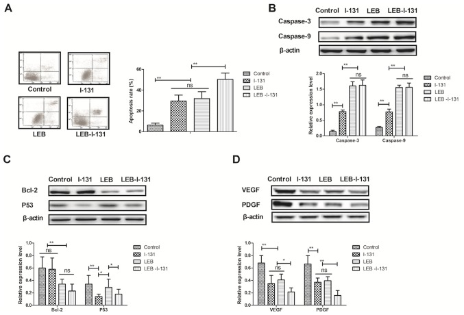 Combination of LEB and I-131 promotes apoptosis of nasopharyngeal carcinoma cells and inhibits tumor angiogenesis-related protein in vitro . (A) Apoptosis rate of HK-1 cells following treatment with LEB or/and I-131 determined by flow cytometry. (B) Protein expression levels of Caspase-3 and Caspase-9 in HK-1 cells determined by western blotting. (C) Protein expression levels of Bcl-2 and P53 in HK-1 cells determined by western blotting. (D) VEGF and PDGF expression levels in HK-1 cells determined by western blotting. The data are presented as the mean + standard error of the mean of three independent experiments. *P