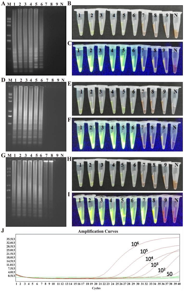 Sensitivity test for the LAMP, CPA and IMSA assays. LAMP assay: (A) Agarose gel electrophoresis of the products; (B) visualization of reactions performed with serially diluted ABL1-ETO fusion gene plasmids ( 1 – 9 ) and SYBR-Green I under visible light; (C) visualization of reactions performed with various fusion gene samples ( 1 – 9 ) and SYBR-Green I under UV light. CPA assay: (D) agarose gel electrophoresis of the products; (E) visualization of reactions performed with serially diluted ABL1-ETO fusion gene plasmids ( 1 – 9 ) and SYBR-Green I under visible light; (F) visualization of reactions performed with various fusion gene samples ( 1 – 9 ) and SYBR-Green I under UV light. IMSA assay: (G) agarose gel electrophoresis of the products; (H) visualization of reactions performed with serially diluted ABL1-ETO fusion gene plasmids ( 1 – 9 ) and SYBR-Green I under visible light; (I) visualization of reactions performed with various fusion gene samples ( 1 – 9 ) and SYBR-Green I under UV light. (J) Reverse transcription-polymerase chain reaction amplification curves for samples 1–9. LAMP, loop-mediated isothermal amplification; CPA, cross-priming amplification; IMSA, isothermal multiple-self-matching-initiated amplification; M, Trans 2K plus II DNA marker; 1–9, 10 6 , 10 5 , 10 4 , 10 3 , 10 2 , 50, 25, 10, and 5 plasmid copies/tube, respectively; N, negative control.