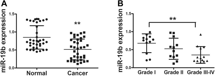 MiR-19b is significantly downregulated in cancer tissues. A, Relative miR-19b expression levels were analyzed by qRT-PCR in 37 pairs of human cancer tissues and adjacent normal tissues. U6 RNA level was used as an internal control. B, The miR-19b expression in 3 different grades of cancer samples. According to the pathological classification, the 37 pairs of human cancer tissues were divided into 3 groups: WHO grade I, grade II, and grade III–IV. Data represent mean (SD) of 3 replicates. **Significant difference at P