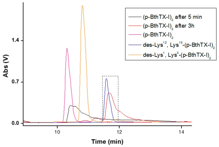 Analytical HPLC comparing the peaks of the peptides (p-BthTX-I) 2 , des-Lys 12 /Lys 13 -(p-BthTX-I) 2 , and des-Lys 1 /Lys 2 -(p-BthTX-I) 2 to the RT of peaks of the stable serum degradation product of (p-BthTX-I) 2 . Samples were eluted at 5 min and 3 h. Analytical HPLC was performed on a Shimadzu system using a C18 column (4.6 × 150 mm, Phenomenex) with a linear gradient of solvent B (5–95%) at 1 mL/min for 30 min (Solvent A: 0.045% trifluoroacetic acid (TFA) in water. Solvent B: 0.036% TFA in acetonitrile). Marked box indicates the peak of des-Lys 12 /Lys 13 -(p-BthTX-I) 2 and the stable degradation peptide produced.