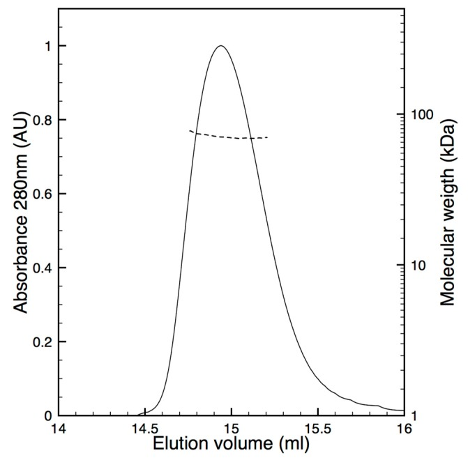 Oligomeric state analysis of pure hBChE-7. After separation of pure hBChE-7 on Superdex 200 Increase 10/300 equilibrated in 20 mM Tris pH 8.0, 150 mM NaCl, the major UV peak (plain line) was analyzed in line by multi-angles light scattering and a constant molecular weight of 70 + 2 kDa was measured (dashed line).