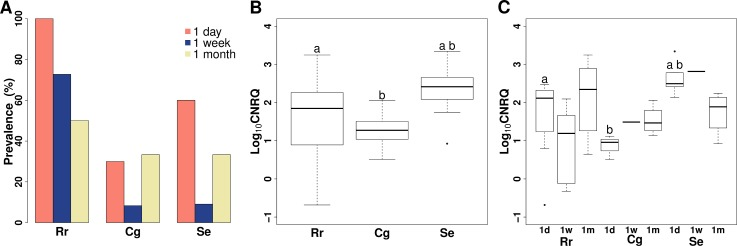 Prevalence and intensity of Myxobolus pseudodispar in host blood in exposure trial #1. (A) Prevalence of the parasite in host species in the relation of sampling time. (B) Boxplot of infection intensity in examined fish species. Significant differences: a: p = 0.043, b: p = 0.041. (C) Boxplot of infection intensity by fish species and at different sampling time. Significant or borderline differences: a: p = 0.087, b: p = 0.016. Rr: common roach Rutilus rutilus ; Cg: gibel carp Carassius gibelio ; Se: rudd Scardinius erythrophthalmus ; Log 10 CNRQ: log10 transformed, calibrated normalized relative quantities of parasite DNA based on qPCR measurements.