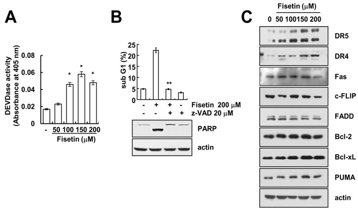 Fisetin induced apoptosis in a caspase-dependent manner. ( A ) Caki cells were treated with the indicated concentrations of fisetin for 24 h. Caspase activities were determined with colorimetric assays using caspase-3 (DEVDase) assay kits; ( B ) Caki cells were treated with 200 μM fisetin in the presence or absence of 20 μM z-VAD-fmk (z-VAD). The sub-G1 fraction was measured by flow cytometry. The protein expression levels of PARP and actin were determined by Western blotting. The level of actin was used as a loading control; ( C ) Caki cells were treated with the indicated concentrations of fisetin for 24 h. The protein expression levels of DR5, DR4, Fas, c-FLIP, FADD, Bcl-2, Bcl-xL, PUMA and actin were determined by western blotting. The level of actin was used as a loading control; the values in ( A , B ) represent the mean ± SD from three independent samples. * p