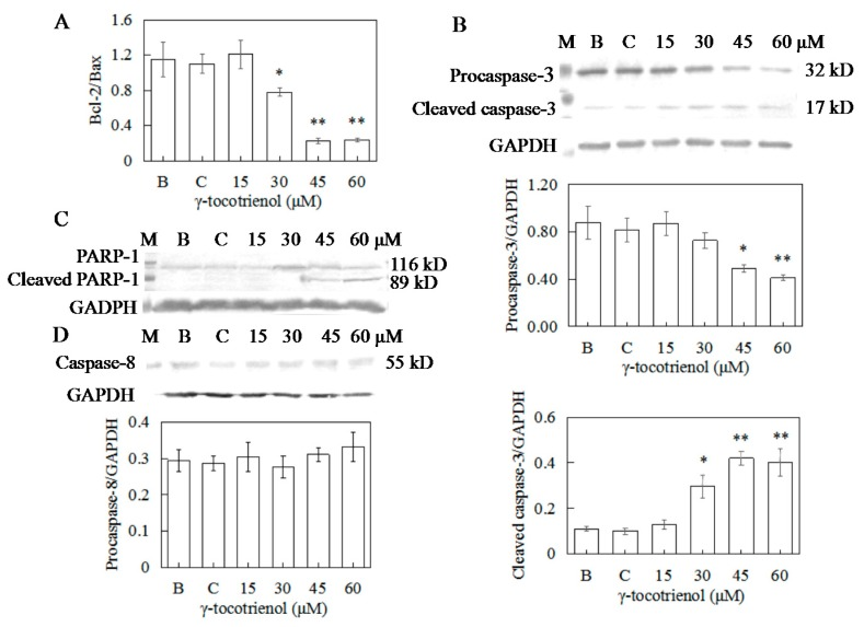 Effects of γ-tocotrienol on expression of bcl-2/bax ( A ), Caspase-3 ( B ), PARP-1 ( C ), and Caspase-8 ( D ) in HeLa cells. Cells were treated with various concentrations of γ-tocotrienol for 24 h. The expression levels of the proteins were analyzed through Western blot method. * p