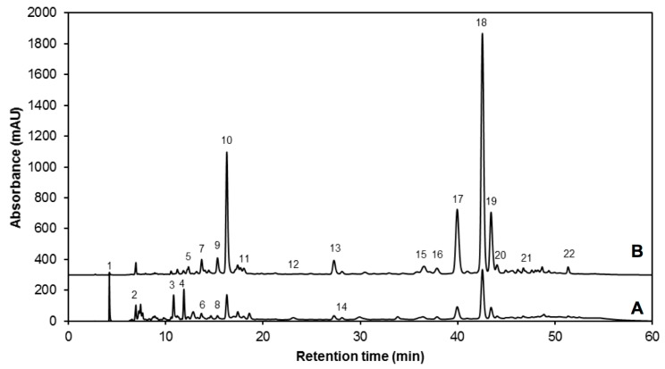 Typical HPLC-DAD chromatogram, shown at ( A ) 280 nm and ( B ) 320 nm of identified phenolic compounds from methanol/water (70:30, v / v ) extracts of 7-day-old control broccoli sprouts. Peak assignment (as indicated in Table 3 ): Gallic acid hexoside I ( 1 ); gallotannic acid ( 2 ); p -hydroxybenzoic acid ( 3 ); gallic acid hexoside II ( 4 ); 4- O -caffeoylquinic acid ( 5 ); digalloyl hexoside ( 6 ); 3- O -hexoside kaempferol ( 7 ); gallic acid derivative ( 8 ); 1- O -sinapoyl-β- d -glucose ( 9 ); sinapoyl malate ( 10 ); 1,2-diferulolylgentiobiose ( 11 ); 5-sinapoylquinic acid ( 12 ); sinapic acid ( 13 ); gallic acid ( 14 ); kaempferol 3- O -sinapoyl-sophoroside 7- O -glucoside ( 15 ); 1,2-disinapoylgentiobiose ( 16 ); 1-sinapoyl-2′-ferulolylgentiobiose ( 17 ); 1,2,2′-trisinapoylgentiobiose ( 18 ); 1,2-disinapoyl-1′-ferulolylgentiobiose ( 19 ); 1,2-disinapoyl-2-ferulolylgentiobiose ( 20 ); 1-sinapoyl-2,2′-diferulolylgentiobiose ( 21 ); (isomeric) 1,2,2′-trisinapoylgentiobiose ( 22 ).