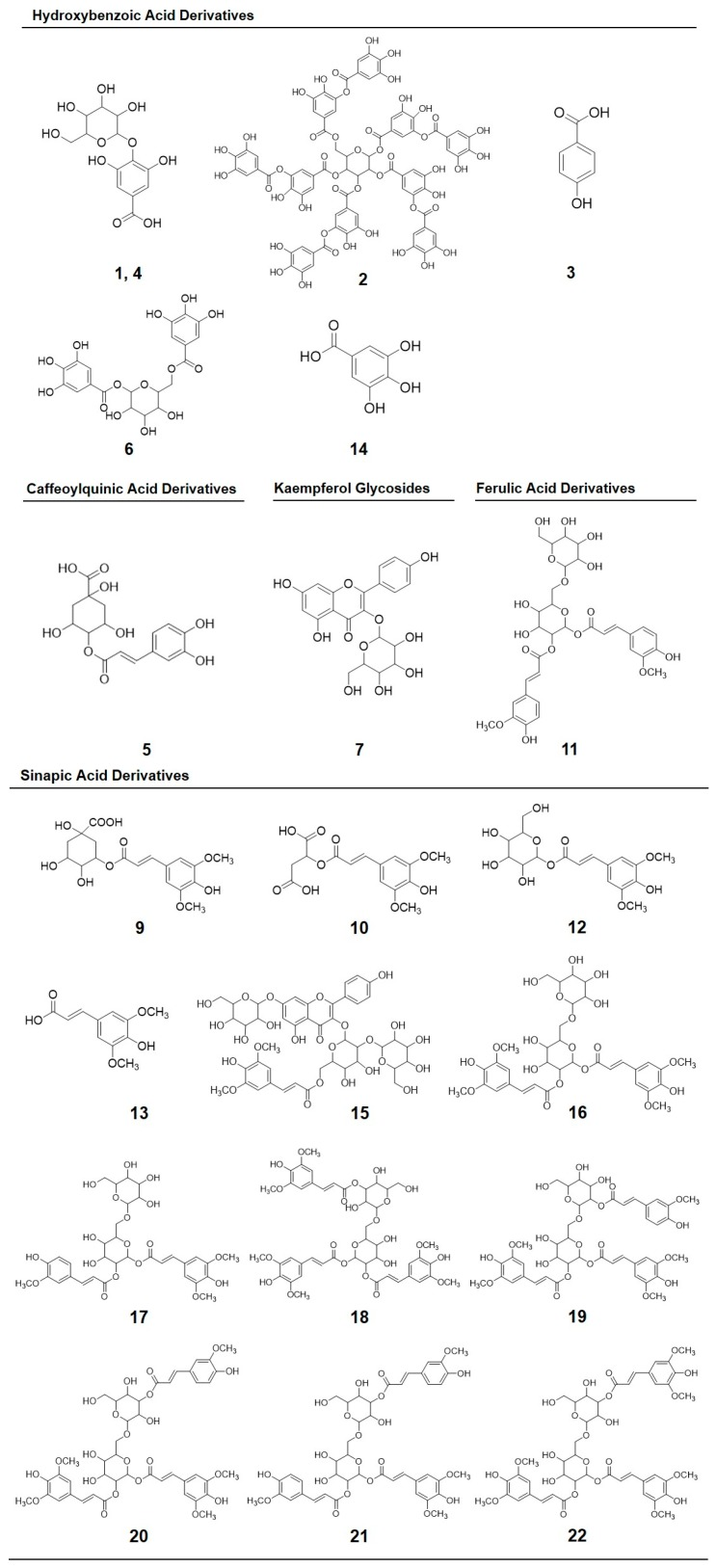 Chemical structures of phenolic compounds identified in broccoli sprouts subjected to UVA or UVB radiation stress: Gallic acid hexoside I ( 1 ); gallotannic acid ( 2 ); p -hydroxybenzoic acid ( 3 ); gallic acid hexoside II ( 4 ); 4- O <t>-caffeoylquinic</t> acid ( 5 ); digalloyl hexoside ( 6 ); 3- O -hexoside kaempferol ( 7 ); 1- O -sinapoyl-β- d -glucose ( 9 ); sinapoyl malate ( 10 ); 1,2-diferulolylgentiobiose ( 11 ); 5-sinapoylquinic acid ( 12 ); sinapic acid ( 13 ); gallic acid ( 14 ); kaempferol 3- O -sinapoyl-sophoroside 7- O -glucoside ( 15 ); 1,2-disinapoylgentiobiose ( 16 ); 1-sinapoyl-2'-ferulolylgentiobiose ( 17 ); 1,2,2'- trisinapoylgentiobiose ( 18 ); 1,2-disinapoyl-1'-ferulolylgentiobiose ( 19 ); 1,2-disinapoyl-2-ferulolylgentiobiose ( 20 ); 1-sinapoyl-2,2'-diferulolylgentiobiose ( 21 ); (isomeric) 1,2,2'-trisinapoylgentiobiose ( 22 ).The numbering corresponds to the peak number assigned in Table 3 .