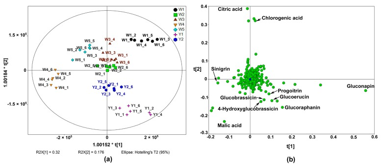 Orthogonal partial least squares-discriminate analysis (OPLS-DA) of seven Chinese kale cultivars analysed by <t>UHPLC-Quadrupole-Orbitrap</t> MS/MS (the number after the cultivar name stands for the six independent biological replicates of each cultivar). ( a ) Score plot; ( b ) Loading plot.