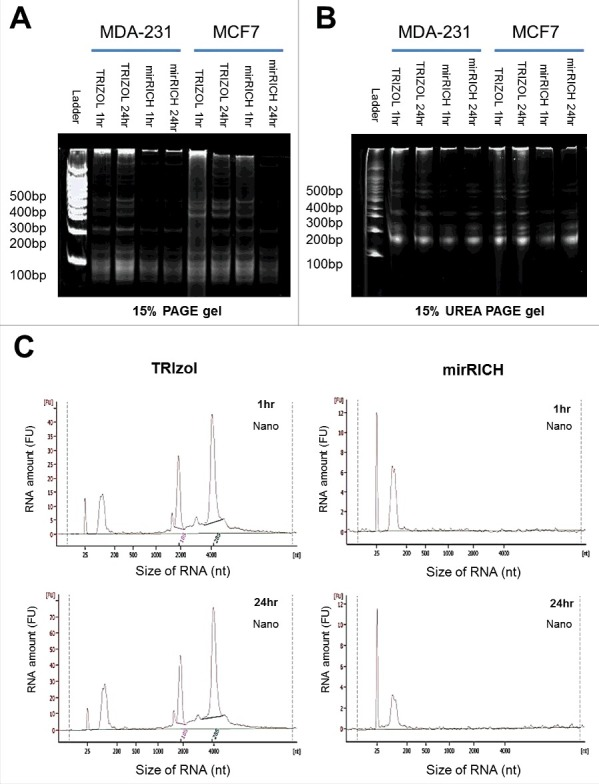 Over-drying time does not affect quantity of small RNA in mirRICH method. (A) 15% PAGE (Polyacrylamide gel electrophoresis) and (B) 15% UREA denaturing gels electrophoresis of the RNA samples are prepared from two different breast cancer cells, MDA-MB-231 and MCF7 cells with either TRIzol with 1hr drying or 24hr drying, mirRICH with 1hr drying or 24hr drying. The 100-bp marker is indicated as ladder. (C) Peak images of experiment samples of MDA-MB-231 and MCF7 were obtained by Aglient RNA 6000 <t>Nano</t> kit respectively.