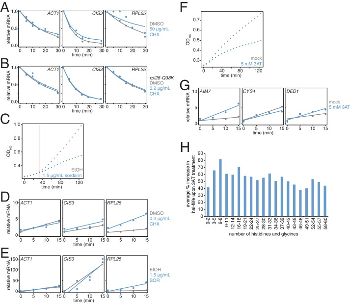 Effects of translation elongation inhibitors on mRNA stability and cell growth. ( A ) Wild-type cells (KWY165) were subjected to mRNA stability profiling immediately after addition of 0.1% DMSO or 50 μg/mL cycloheximide in 0.1% DMSO. Data were collected and plotted as in Figure 3B . ( B ) rpl28-Q38K cells (KWY7335) were subjected to mRNA stability profiling immediately after addition of 0.1% DMSO or 0.2 μg/mL cycloheximide in 0.1% DMSO. Data were collected and plotted as in Figure 3B . ( C ) Wild-type cells (KWY165) were treated with 0.1% ethanol (gray) or 1.5 μg/mL sordarin in 0.1% ethanol (blue) and growth by absorbance at 600 nm was monitored. The horizontal orange line marks t = 33 min where the growth rates diverge. ( D ) Thio-uracil containing mRNAs from the experiment described in Figure 3B were measured and levels were plotted. RNA levels were normalized to a 4TU-labeled hSRP1 spike RNA and to the time = 0 value for the mock (DMSO) treated sample. ( E ) Thio-uracil containing mRNAs from the experiment described in Figure 3C were measured and levels were plotted. RNA levels were normalized to a 4TU-labeled hSRP1 spike RNA and to the time = 0 value for the mock (EtOH) treated sample. ( F ) Wild-type cells (KWY165) were treated with 5 mM 3AT (blue) or untreated (gray) and growth by absorbance at 600 nm was monitored. ( G ) Thio-uracil containing AIM7 , CYS4 and DED1 mRNAs from the experiment described in Figure 3C–E were measured and levels were plotted. RNA levels were normalized to a 4TU-labeled hSRP1 spike RNA and to the time = 0 value for the mock (DMSO) treated sample. ( H ) Fold increase in mRNA half-life values when cells are treated with 5 mM 3AT (derived from the experiment described in Figure 3H ) were computed for groups of mRNAs binned by their histidine and glycine codon contents.