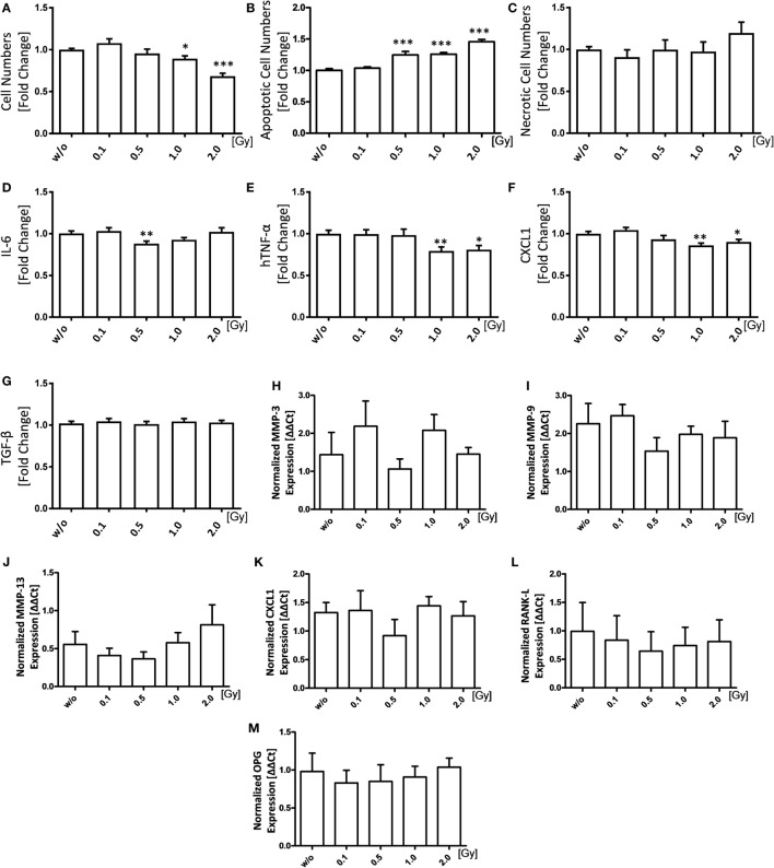 Low-dose irradiation induces apoptosis of fibroblast-like synoviocytes (FLS) and slightly impacts on the inflammatory FLS phenotype. Inflammatory FLS obtained from h TNF- α tg mice were analyzed 96 h after irradiation with various doses of X-rays. Cell numbers (A) of living cells were counted using a Neubauer chamber and cell death was determined via flow cytometry analysis after staining with AxV-FITC/PI. Vital cells were defined as AxV − /PI − , apoptotic cells as AxV + /PI − (B) , and necrotic ones as AxV + /PI + (C) . Quantification of secreted IL-6 (D) , hTNF-α (E) , CXCL1 (F) , and TGF-β (G) was performed 96 h after irradiation in supernatants of FLS cultures via enzyme-linked immunosorbent assays. Total <t>RNA</t> levels were isolated using phenol–chloroform extraction. Gene expression was analyzed using SYBR Green quantitative <t>PCR</t> analysis (H–M) . Depicted is joint data obtained of five h TNF- α tg-FLS cell lines, examined in four independent experiments, each performed at least in triplicates. Data are presented as mean ± SEM, tested for normal distribution, and analyzed by students t test (A–G) or two-tailed Mann–Whitney U test (H–M) in comparison to mock-treated (w/o) controls at 96 h after irradiation (* p