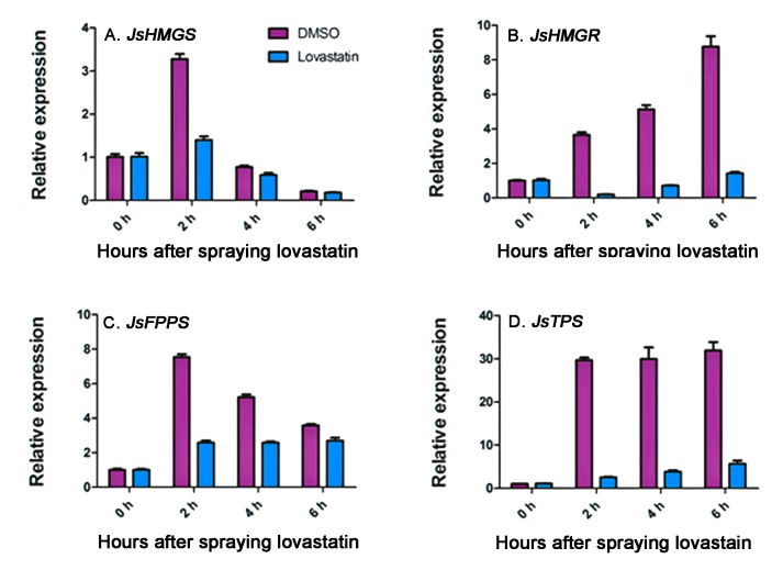 qRT-PCR analysis of JsHMGS ( A ); JsHMGR ( B ); JsFPPS ( C ); and JsTPS ( D ) expressions in J. sambac 'Bifoliatum' flowers immediately after being sprayed with 50 μm/L lovastatin or dimethyl sulfoxide (DMSO) to 6 h, thereafter. The expression levels were normalized based on the expression of the internal control gene actin and corresponding genes expressed at the bud stage. The bars represent standard errors of three replicates ( n = 3).