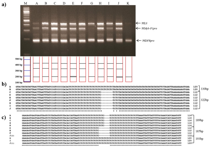 Multiplex PCR identification of 11 commercial dried leaves and twigs of Jasoyeop products. ( a ) Lanes on 3% electrophoresis gel: M: 100 bp DNA ladder; A–K: purchased commercial dried Jasoyeop products (see Table 3 for full details); ( b , c ) Sequence analysis of PCR products amplified using the PfMybpro and PfDFRpro marker primers, respectively, aligned using Clustal W2.