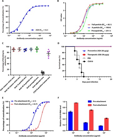 Characterizations of NAb 2G8. ( A ) Neutralization assay of CVA10 NAb 2G8. The IC 50 value is 0.2 μg/ml. ( B ) Binding efficacy of NAb 2G8 evaluated with the indirect ELISA. NAb 2G8 exhibits high binding affinities with the CVA10 particles [median effective concentration (EC 50 ) values from 83.1 to 251.1 ng/ml]. The IC 50 and EC 50 values were calculated with nonlinear regression fitting curves. The optical density (OD) value was read at A 450/620 . ( C ) The competitive ELISA of NAb 2G8. The binding of NAb 2G8 to CVA10 particles was significantly blocked by sera from mice immunized with CVA10 and CVA10-positive human sera. The percentages of blocking are expressed as means ± SD. ( D ) In vivo preventive and therapeutic efficacy of NAb 2G8. The infected mice were treated with NAb 2G8 12 hours before (blue line) or 24 hours after (red line) infection intraperitoneally with CVA10 and monitored daily after inoculation. Both experimental groups showed 100% survival rates, but 0% for two control groups. ( E ) Neutralization assay of NAb 2G8 at pre-attachment (blue line) or post-attachment (red line). NAb 2G8 exhibits much higher neutralizing capacity at pre-attachment (IC 50 = 2.1 μg/ml) than at post-attachment (IC 50 = 22.7 μg/ml). ( F ) Amount of cell-bound CVA10 viruses detected by <t>RT-PCR.</t> Indicated with the relative CVA10 genome level, the amount of cell-bound viruses gradually decreased as a function of increasing NAb 2G8 concentrations in both cases of pre- and post-attachment. Values are expressed as means ± SD. Experiments were repeated in triplicate. <t>PBS,</t> phosphate-buffered saline.