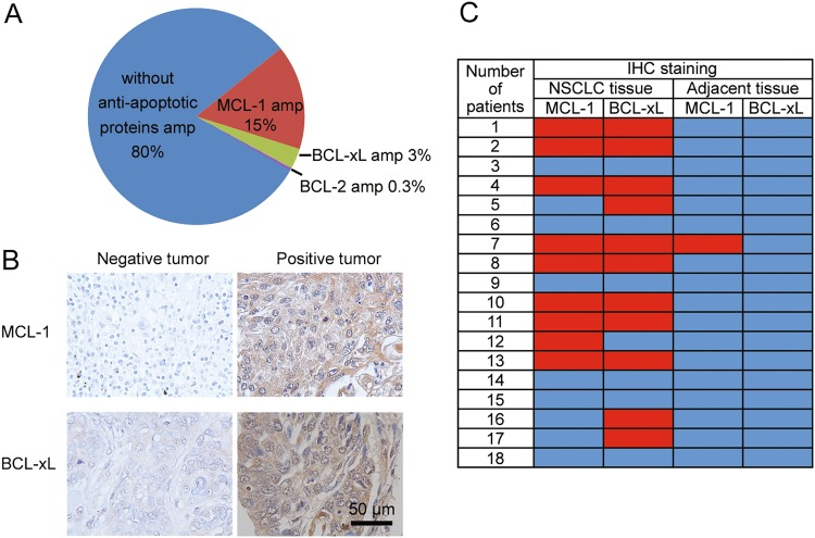 MCL-1 and BCL-xL are upregulated in a subset of NSCLCs. a Analysis of TCGA database on MCL-1 and BCL- xL gene amplifications in NSCLC patients ( n = 230). amp, amplification. b Representative immunohistochemical staining results of NSCLC tissue. c Summary of immunohistochemical staining results of NSCLC tissue and adjacent normal lung tissue. Red indicates positive immunohistochemical staining, and blue indicates negative immunohistochemical staining