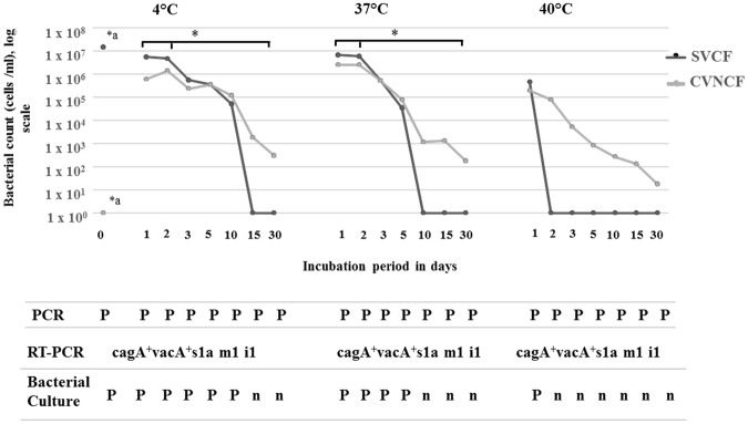 Survival of Helicobacter pylori in experimentally contaminated UHT milk. UHT milk was artificially inoculated with cytotoxic spiral viable culturable form (SVCF) of H . pylori strains (1.5 × 10 7 cells/ml, 0 hour) of the genotype cagA + vacA + s1a m1 i1 isolated from cow fecal samples. The milk was incubated at 4 °C, 37 °C and 40 °C for a time period from 1 to 30 days. After each time period, the numbers of the spiral viable culturable form (SVCF) and coccoid viable non-culturable form (CVNCF) present in milk were counted using a haemocytometer. *a indicates a significant difference in the bacterial count between 0 hour and all other time points, * with horizontal lines indicates significant differences between day 1 as well as day 2 and the subsequent days (day 3 to 30 days) using Repeated Measures ANOVA. The milk was further subjected to PCR, bacterial culture and reverse transcription PCR (RT-PCR); P indicates positive, n means negative.