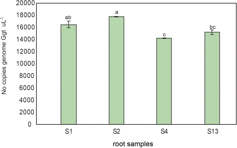 Ggt DNA quantification by quantitative <t>PCR</t> (number of copies genome Ggt uL -1 ) in roots from wheat plants growing in conducive soil 1 (S1), or suppressive soils 2, 4, and 13 (S2, S4, and S13). Tukey test to compare treatments means, values followed by the same letter do not differ at P