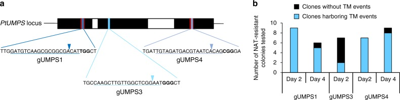<t>CRISPR/Cas9-induced</t> knock-out mutations at the PtUMPS locus. a Schematic representation of the position and sequence targeted by each gRNA: gUMPS1, gUMPS3, and gUMPS4. The 20-nt region of the target site is underlined and the PAM (Protospacer Adjacent Motif) is shown in bold letters. b Efficiency of targeted mutagenesis induced by the delivery of the NAT resistance cassette, gRNA, and Cas9 encoding vectors into WT Phaeodactylum cells after selection on NAT containing medium
