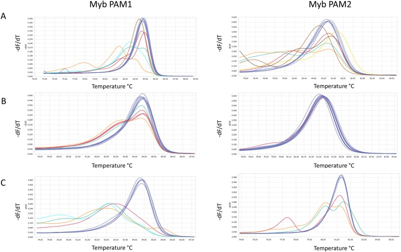 Screening of transformants for Cas9-derived mutations in the Myb PAM1 and Myb PAM2 target regions. High resolution melting (HRM) analyses data presented as normalized melting peaks generated from PCR products from ( A ) primary colonies resulting from transformation with pKS diaCas9_sgRNA using biolistic bombardment (one month after transformation; n=12) ( B ) primary colonies resulting from transformation with pPtPuc3m diaCas9_sgRNA using bacterial conjugation (one month after transformation; n=12); ( C ) re-plated colonies resulting from transformation with pPtPuc3m diaCas9_sgRNA (three months after transformation; n=12). WT profiles are represented by dark blue lines. Differently colored melting peaks indicate a melting behavior unlike that of the WT PCR product and implies the presence of indels in the Myb PAM1 and PAM2 target regions. Normalized melting peaks were generated by LightCycler® 96 Application Software Version 1.1.