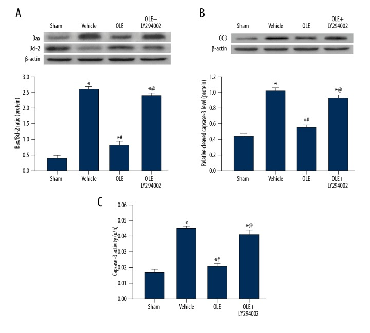 OLE affects Bcl-2 family, cleaved <t>caspase-3</t> protein expression, and Caspase-3 activity on day 5 after IRI or sham. Representative Western blots and densitometric quantification of Bax/Bcl-2 ( A ). Representative Western blots and densitometric quantification and cleaved caspase-3/β-actin on day 5 after IRI ( B ). Caspase-3 activity in brain tissues of rats in different groups ( C ). Data are presented as the mean ±SEM (* P