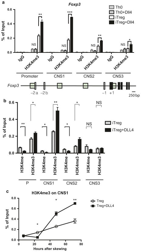 DLL4-enriched permissive histone mark H3K4me3 around Foxp3 promoter and consensus non-coding sequences during iTreg differentiation. a 2 × 10 6 of naive CD4 T cells were skewed toward Th0 or iT reg differentiation with or without DLL4 stimulation in vitro. Chromatin immunoprecipitation were performed to detect H3K4me3 around Foxp3 promoter, consensus non-coding sequence (CNS)1, CNS2, CNS3 after 72 h. b Changes of H3K4me and H3K4me3 by DLL4 stimulation during iT reg differentiation was detected at 48 h of skewing. c H3K4me3 kinetics at Foxp3 CNS1 after 6 h, 24 h, 48 h and 72 h post iT reg differentiation were measured with or without DLL4 stimulation in vitro. Data represent mean ± SEM. Data were from one experiment representative of two to three experiments. * P