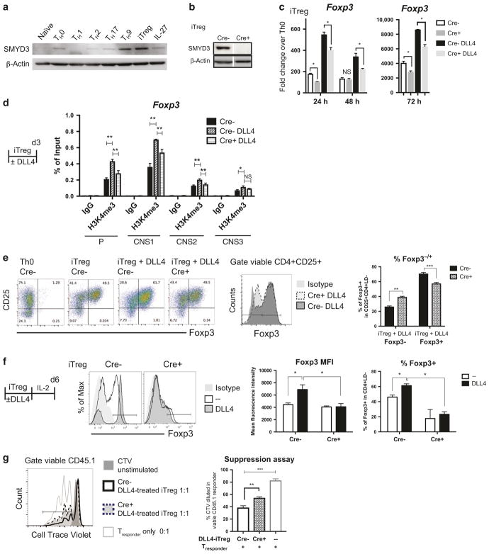 Smyd3 regulated DLL4-enhanced iT reg differentiation and function in vitro. a Naive CD4 T cells (10 6 ) from wild-type B6 spleen were activated (Th0) or differentiated to Th1, Th2, Th17, Th9, iT reg , and IL-27 T R 1. After 72 h, SMYD3 were blotted. b Naive CD4 T cells (10 6 ) from Cre− control or Cre + CD4-specific SMYD3 conditional knockout (cKO) were differentiated to iT reg . After 72 h, SMYD3 level were quantified by western blotting. c Smyd3 mRNA level were measure in iT reg and DLL4-stimulated iT reg differentiation at 24, 48, and 72 h from Cre− control and Cre + Smyd3 cKO. d Naive CD4 T cells (2 × 10 6 ) from Cre− control with or without DLL4 stimulation or Cre + CD4-specific SMYD3 were differentiated to iT reg . After 72 h, H3K4me3 were precipitated, and Foxp3 promoter and CNS1, 2, 3 were qPCR quantified compared with input control. e Naive CD4 T cells (10 6 ) from Cre− control or Cre + SMYD3 cKO were activated (Th0) or differentiated to iT reg with or without DLL4. After 72 h of differentiation, Foxp3 and CD25 were labeled and quantified by flow cytometry. f Naive CD4 T cells (10 6 ) from Cre− control or Cre + SMYD3 cKO were activated (Th0) or differentiated to iT reg with or without DLL4. After 72 h of differentiation, both Th0 and iT reg were rested in IL-2 10 ng/mL for another 72 h. Foxp3 were detected and quantified by flow cytometry. g After 6 days of iT reg differentiation with DLL4 as described in f , viable DLL4-exposed iT reg were sorted out as DAPI − CD25+ and co-cultured with Cell Trace violet (CTV) labeled CD45.1+ naive T cells with anti-CD3/anti-CD28 beads. After 3 days in co-culture, proliferation was assessed by CTV dilution in CD45.1 + responder cells. Data represent mean ± SEM. Data were from one experiment representative of two to three experiments. * P