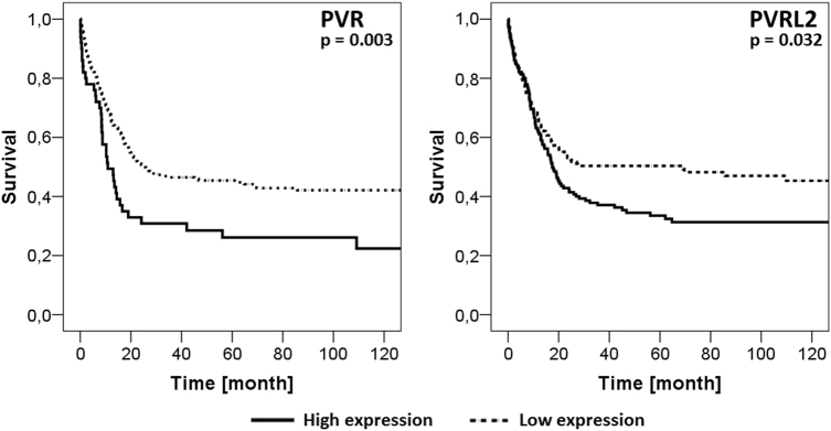 Impact of PVR and PVRL2 expression on clinical outcome. Microarray-based gene expression data of 290 AML patients (cohort B) were divided into low and high expressors and analyzed for OS. High expression of either PVR or PVRL2 correlated significantly with a shortened overall survival