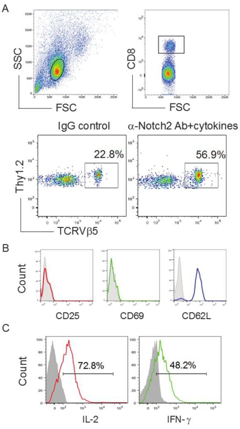 Development of Ag-specific CD8 + T cells by genetic modification of HSCs following in vivo priming. TCR gene-transduced HSCs (GFP + ) in PBS were sorted, before being adoptively transferred into Thy1.1 congenic mice. On the following week, mice were i.p. injected with agonistic α-Notch2 Ab, rIL-7 and rFlt3L or a mouse IgG/PBS control. ( A ) After another two weeks, Thy1.2 + TCRVβ5 + cells from the pooled LNs and spleen were analyzed by flow cytometry, after gating on CD8 + T cell population (upper panels). A representative image from mice receiving the HSCs transduced with the Mig-TCR is shown, which was obtained after IgG control or agonistic α-Notch2 Ab, rIL-7 and rFlt3L protein injections. ( B ) Expression of CD25, CD69 and CD62L was analyzed by flow cytometry, after gating on CD8 + Thy1.2 + TCRVβ5 + T cells from the pooled LNs and spleen (dark lines; shaded areas indicate isotype controls). Data are representative of three independent experiments. ( C ) IL-2 and <t>IFN-γ</t> production (dark lines; shaded areas indicate isotype controls). The pooled LNs and spleen were stimulated with OVA 257–264 peptide and analyzed by intracellular cytokine staining, after gating on Thy1.2 + TCRVβ5 + cells. Data are representative of three independent experiments.
