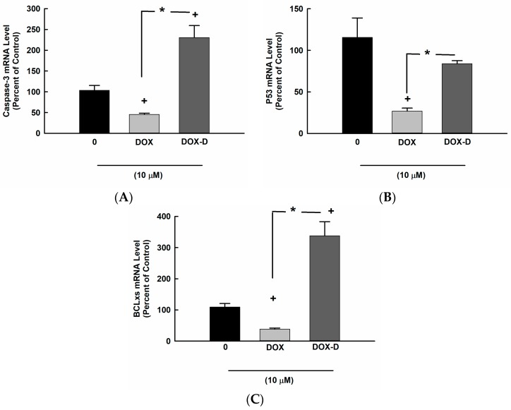 Effect of DOX and DOX-Vit D on proapoptotic genes. MG63 cells were treated for 24 h with 10 µM DOX and DOX-Vit D. Thereafter, total RNA was isolated using TRIzol reagent, and the mRNA levels of ( A ) Caspase-3, ( B ) p53 and ( C ) BCLxs were quantified using real time-PCR and normalized to a β-actin housekeeping gene. The results are presented as the mean ± SEM ( n = 6). + p