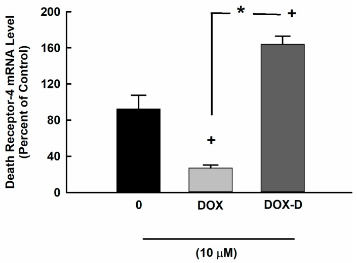 Effect of DOX and DOX-Vit D on the expression of DR-4. MG63 cells were treated for 24 h with 10 µM DOX and DOX-Vit D. Thereafter, total RNA was isolated using TRIzol reagent, and the mRNA level of DR-4 was quantified using real time-PCR and normalized to a β-actin housekeeping gene. The results are presented as the mean ± SEM ( n = 6). + p