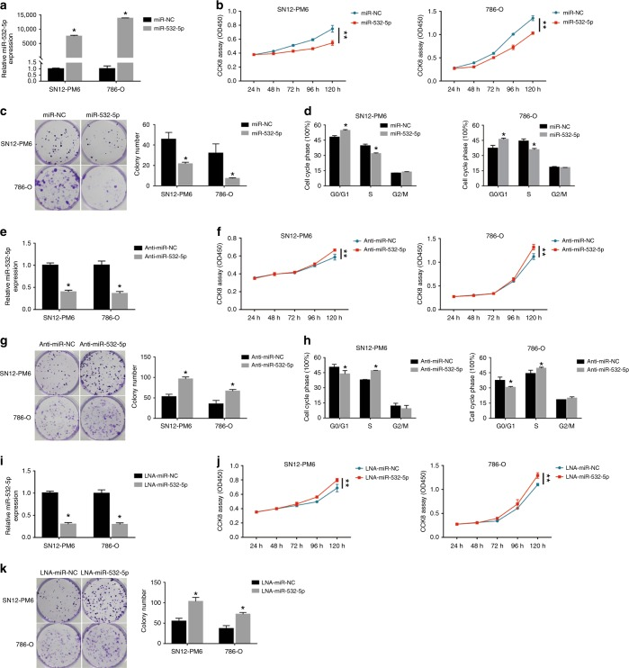 miR-532-5p inhibits renal cancer cell proliferation in vitro. a The expression of miR-532-5p was determined by qRT-PCR in SN12-PM6 and 786-O cells after transfection with the miR-532-5p mimic or miR-NC. b Cell proliferation was analyzed by CCK8 assays in SN12-PM6 and 786-O cells after transfection with the miR-532-5p mimic or miR-NC. c Colony formation was determined in SN12-PM6 and 786-O cells after transfection with the miR-532-5p mimic or miR-NC. The results were averaged from three experiments; error bars indicate ± 1 SD, * p