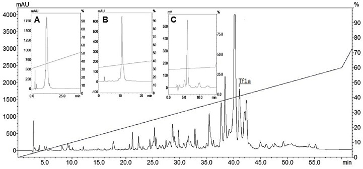 Chromatographic profile of Tityus fasciolatus venom. Chromatographic profile of 1 mg of Tityus fasciolatus crude venom using the RP-HPLC C18 column at 1 mL/min flow rate monitored at 216 nm. The fraction of interest, highlighted in the large image as Tf1a, eluted at 41.1 min (~41.1% acetonitrile). ( A ) 0.5%[B]/min. ( B ) Second purification step with 0.5%[B]/min at 45 °C. ( C ) Last purification step with 0.3%[B]/min at 45 °C.