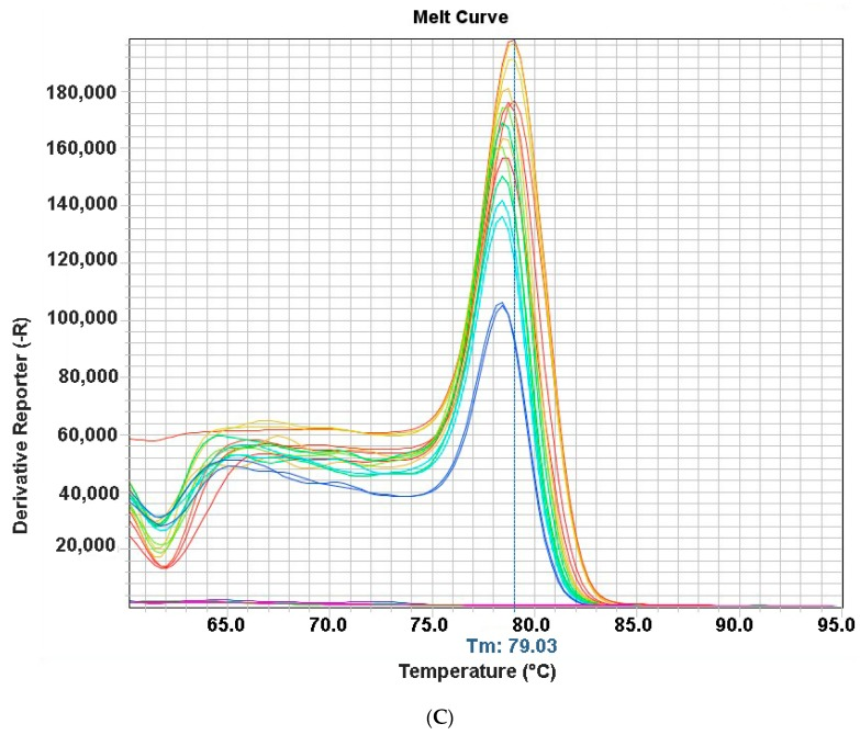 Sensitive real time fast-real time PCR (qPCR) based on SYBR ® Green for detection and quantification of non-structural (NS) gene of Chicken Parvovirus (ChPV)—( A ) Standard curve using 10-fold serial dilution of NS gene plasmid of ChPV; ( B ) Amplification Plot; ( C ) Melting Curve.