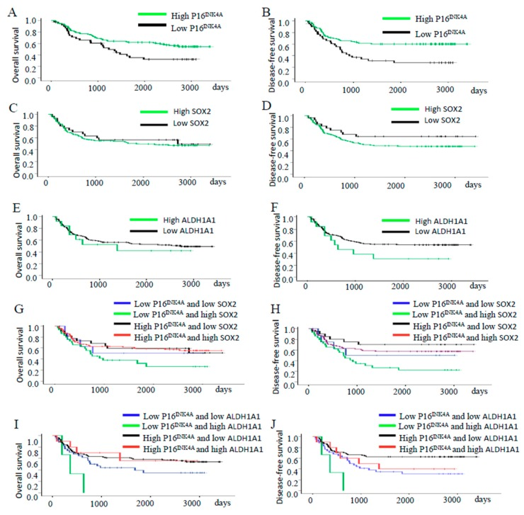 Survival and recurrence outcomes of patients with different expressions of P16 INK4A , SOX2, and ALDH1A1 in tumors. ( A , B ) Cervical cancer patients with high P16 INK4A expression had a better five-year OS rate ( p = 0.016) and better five-year DFS rate ( p = 0.02) than those with lower expression. ( C , D ) Patients with high SOX2 expression had similar five-year OS and DFS than those with low expression ( C , p = 0.598 and D , p = 0.141). ( E , F ) Patients with high ALDH1A1 expression had similar five-year OS and DFS than those with low expression ( E , p = 0.591 and F , p = 0.131). ( G , H ) The patients with low P16 INK4A /high SOX2 expression had similar five-year OS rates ( G , p = 0.118) but worse five-year DFS rates ( H , p = 0.009) than those with high P16 INK4A /lower SOX2 expression. ( I , J ) The patients with low P16 INK4A /high ALDH1A1 expression had worse five-year OS rates ( I , p = 0.030) and worse five-year DFS rates ( J , p = 0.003) than those with high P16 INK4A /lower ALDH1A1 expression.