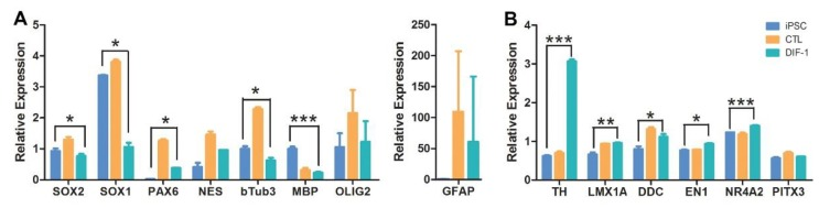 TaqMan quantitative RT-PCR analysis of dopamine-differentiated neural stem cells (NSCs). ( A ) Expression level of genes markers of NSCs and their progeny ( NESTIN , SOX1 , SOX2 PAX6 , β-Tub-III , MBP , Olig-2 , GFAP ) under control media (orange) and DIF1 media derived dopaminergic differentiation (green) and from pluripotent undifferentiated CJ01 iPSC (blue); ( B ) expression level of genes markers of the midbrain dopaminergic lineage ( TH , LMX1A , EN1 , NURR1 , PITX3 , and dopamine decarboxylase ( DDC ) enzyme that convert L-DOPA to dopamine) in NSC differentiated under control media (orange) or DIF1 media (green) and from undifferentiated CJ01 iPSC (blue), confirming the increase in the dopaminergic neuronal differentiation. * p