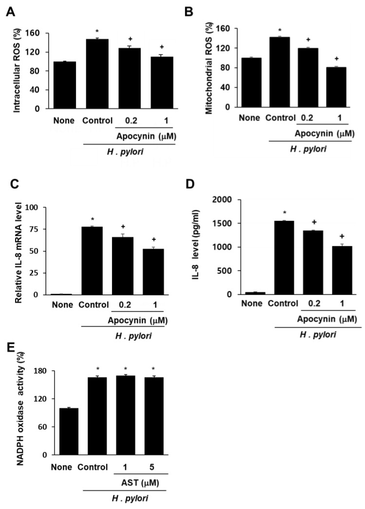 """Effect of apocynin on ROS levels and IL-8 expression and effect of astaxanthin on NADPH oxidase activity in H. pylori -infected AGS cells. The AGS cells were pre-treated with the indicated concentrations of a NADPH oxidase inhibitor apocynin for 3 h and then stimulated with H. pylori for 1 h (for intracellular and mitochondrial ROS levels), 4 h (for IL-8 mRNA level), and 24 h (for IL-8 protein level in the medium). ( A ) Plot of the relative ROS level in AGS cells measured by DCF-DA fluorescence. Column """"None"""" corresponds to uninfected AGS cells, column """"Control"""" to H. pylori -infected AGS cells, and columns """"0.2"""" and """"1"""" to H. pylori -infected AGS cells pretreated with 0.2 and 1 μM apocynin, respectively. ( B ) Plot of the relative mitochondrial ROS level in AGS cells measured by MitoSOX fluorescence. The description of the columns is the same as in ( A ). ( C ) mRNA expression of IL-8 was determined by real-time PCR analysis. The description of the columns is the same as in ( A ). ( D ) Plot of the relative concentration of IL-8 in the media of cultured AGS cells determined by using the ELISA method. The description of the columns is the same as in ( A ). ( E ) Plot of the relative NADPH oxidase activity in AGS cells. The cells were pre-treated with 5 μM astaxanthin for 3 h and then stimulated with H. pylori for 1 h. NADPH oxidase activity was measured by lucigenin assay. The description of the columns is the same as in ( A ). * p"""