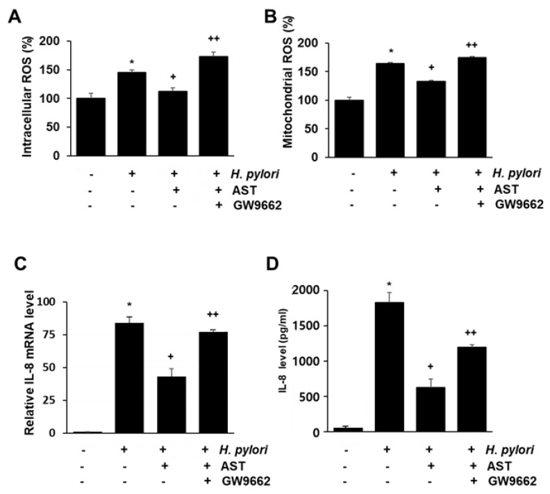 The effect of GW9662 on ROS levels and IL-8 expression in H. pylori —infected AGS cells treated vs not treated with astaxanthin. The cells were treated with astaxanthin (5 μM) for 3 h without, or in combination with, the PPAR-γ antagonist GW9662 (5 μM), and then stimulated with H. pylori for 1 h (for intracellular and mitochondrial ROS levels), 4 h (for IL-8 mRNA level), and 24 h (for IL-8 protein level in the medium). ( A ) A plot of the relative intracellular ROS levels measured by DCF-DA fluorescence. ( B ) A plot of the relative mitochondrial ROS level measured by <t>MitoSOX</t> fluorescence. ( C ) A plot of the relative mRNA expression of IL-8 determined by real-time PCR analysis. ( D ) A plot of the concentration of IL-8 in the media determined by ELISA. * p